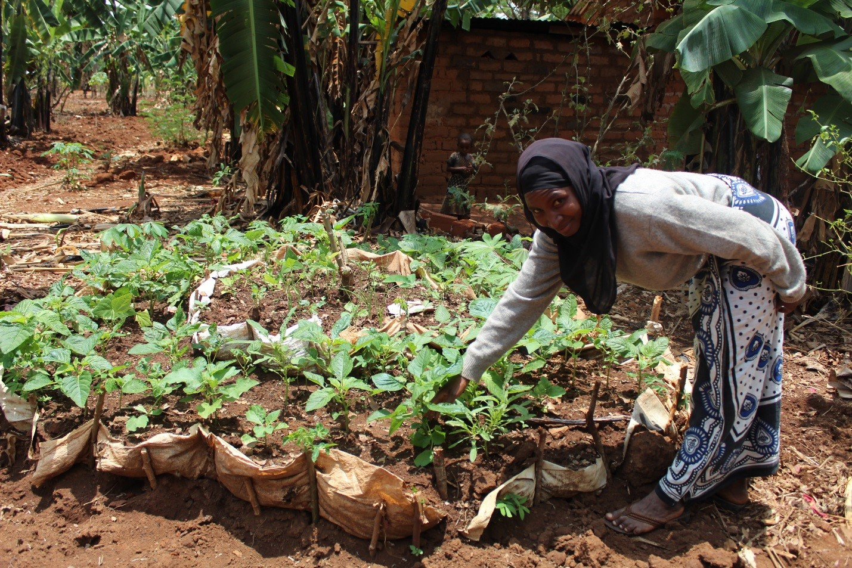 Innovate 'Keyhole' gardens help refugees improve their nutrion